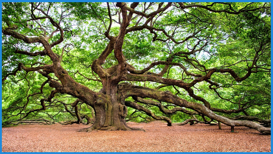 Lookalike audience oak tree