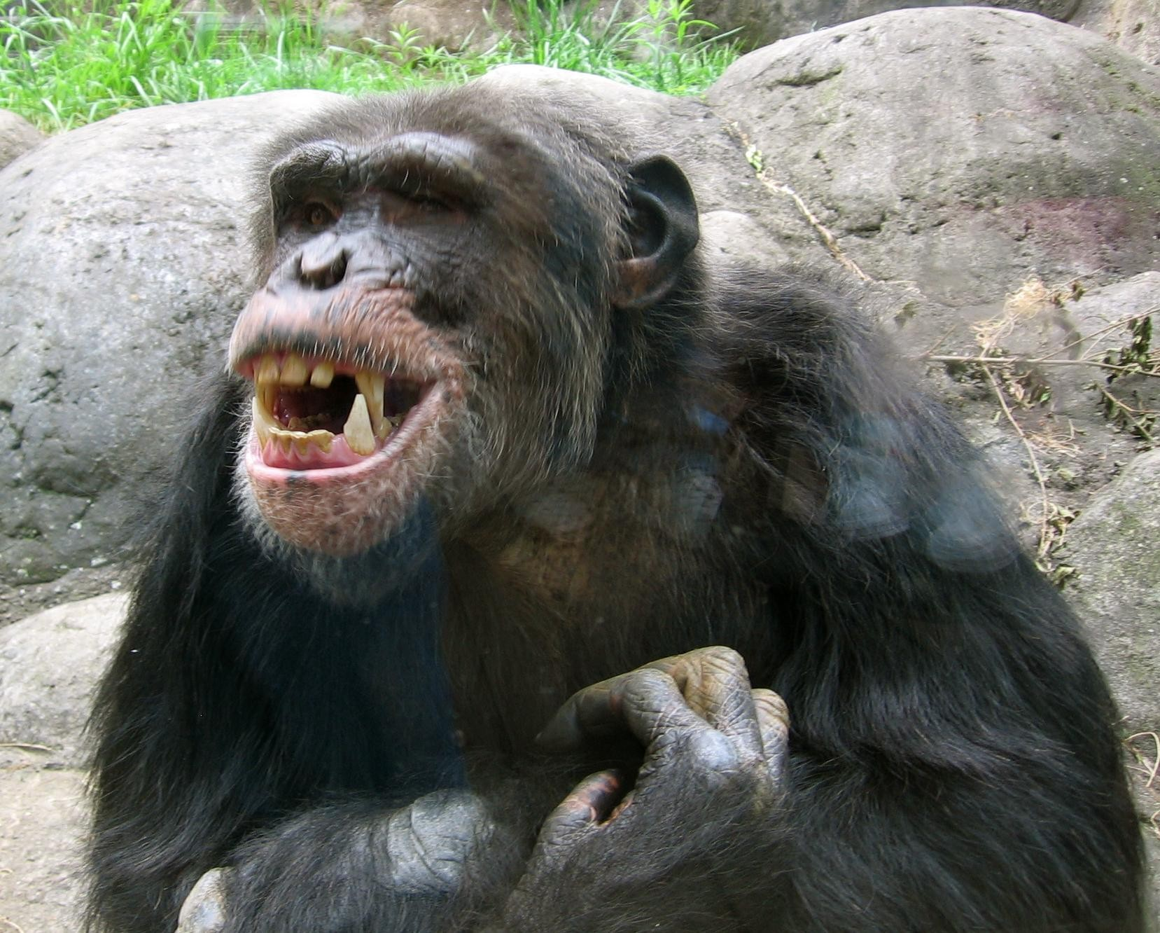 the-ups-of-being-a-PPC-agency-owner-happy-chimp